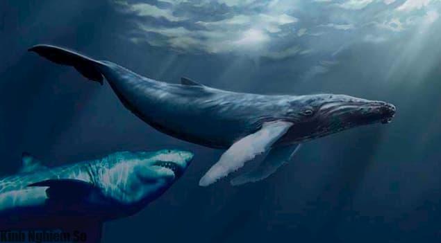 Cá mập Megalodon thời tiền sử