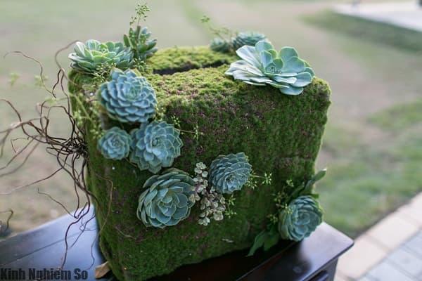 Nét đẹp cây hoa sen đá