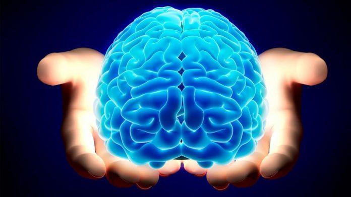 Nếp nhăn trên não