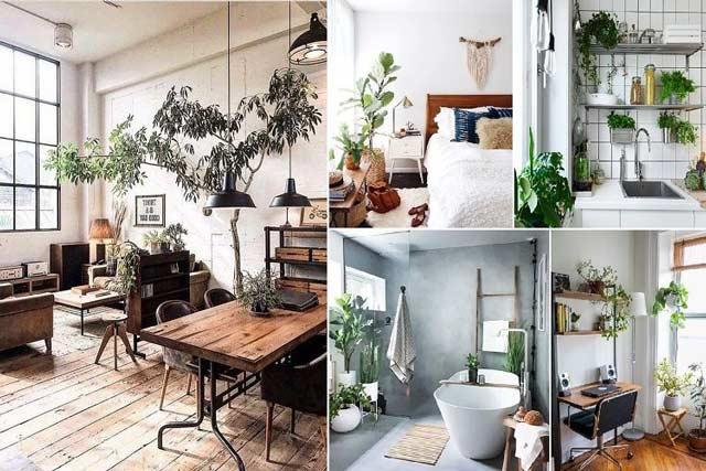 Cây trồng thanh lọc không khí trong nhà