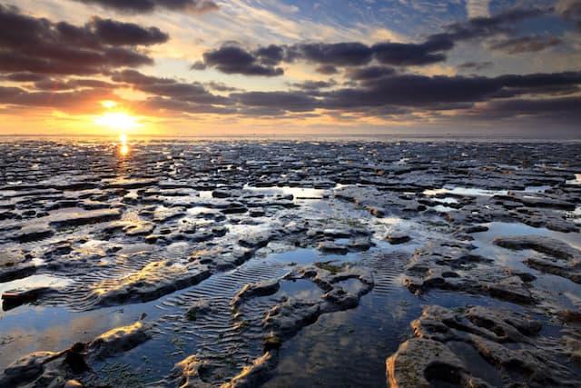 Vẻ đẹp biển Wadden đã được Google Doodle tôn vinh kỷ niệm ngày 30/06